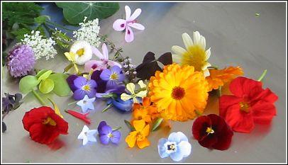 jedle kvety pouzitie